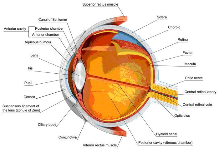 tonometria ottica bergamini